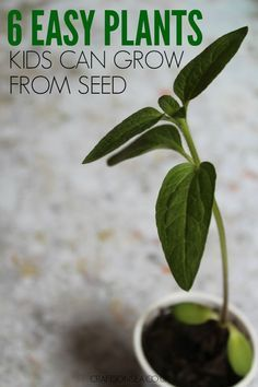 There's no one as results driven as kids so make sure you keep them excited about gardening with these 6 easy plants kids can grow from seed.