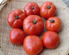 Ararat Flame Tomato -60 days, indet. butsh. Hungarian heirloom, good flavor.