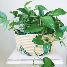 Need to hide an ugly pot? Put it in a basket! This easily disguises a not so pretty pot without the work of repotting it.  www.paisleyandsparrow.com  #fairtrade #tanzania