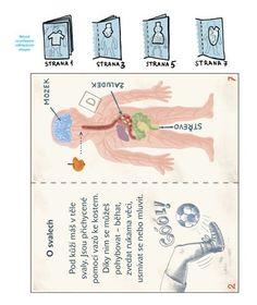 atlas lidského těla 4 Nursery School, Human Body, Rv, Crafts For Kids, Health, Biology, Anatomy, Crafts For Children, Motorhome
