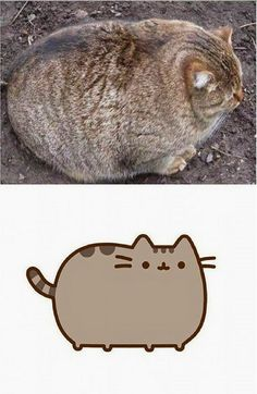 Funny pictures about The Real Pusheen. Oh, and cool pics about The Real Pusheen. Also, The Real Pusheen photos. Funny Animal Photos, Animal Memes, Funny Animals, Funny Pictures, Cute Animals, Animals Photos, Funny Pics, Funny Stuff, Crazy Cat Lady