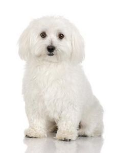 How to Make a White Dog White Again-must remember!
