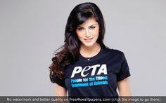 Sunny Leone PETA HD wallpaper - Download Sunny Leone PETA HD wallpaper for your desktop tablet or mobile device