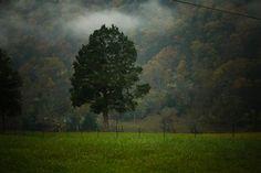 Morning Glory Appalachian Mountains - Yellow Spring, WVA