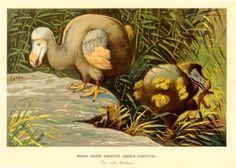 dodo bird running - Google Search