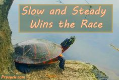 Slow and Steady Wins the Race | Park Ridge Psychological Services