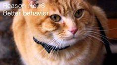 Considering walking your cat? Here are ten reasons why you should. petoodles.net