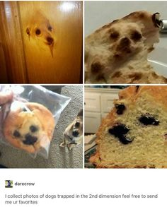 In order to save you some time, we've searched the entire internet to bring you the best funny pictures of the day. Lol Memes, Really Funny Memes, Stupid Funny Memes, Funny Stuff, Funny Cute, The Funny, Hilarious, Animal Memes, Funny Animals