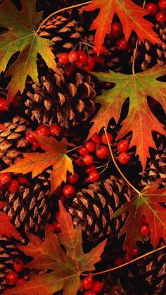 Herbst - autumn pine cones and leaves Autumn Scenes, Seasons Of The Year, Fall Pictures, Autumn Photos, Fall Images, Autumn Day, Winter, Fall Harvest, Autumn Inspiration