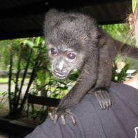 12samantha springs_shoulder monkey.jpg