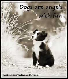 Dogs are angels with fur.they add another dimension and love to our lives. Reminds me of my sweet Border Collie, Friday. All Dogs, I Love Dogs, Puppy Love, Dogs And Puppies, Animal Quotes, Dog Quotes, Dog Sayings, Lovers Quotes, Funny Quotes