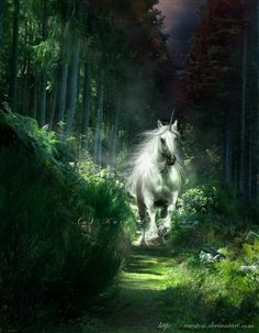 Unicorn live wallpaper, white unicorn in the fairy forest ...