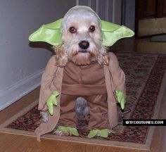 Pet Costumes - Make a Halloween Costume For Your Dog Yoda Dog Costume, Yoda Halloween Costume, Cute Dog Costumes, Animal Costumes, Costume Ideas, Happy Halloween, Costume Contest, Halloween Pictures, Spooky Halloween