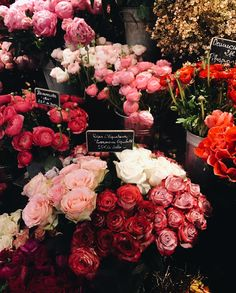 Jessica Whitaker fresh pink and red roses bouquets at a flower shop in Paris, France