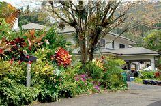 "Oahu & Kauai Filming Locations for Alexander Payne's ""The Descendants"" Waikiki Beach, Oahu Hawaii, Kauai, Best Places To Travel, Places To Go, Tropical Landscaping, Tropical Gardens, Tropical Flowers, Hawaiian Homes"