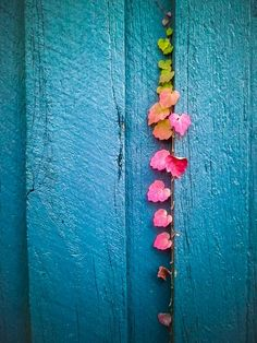 (Photography by John P Fisk) gorgeous colored leaves growing along a turquoise blue painted building Color Splash, Color Pop, Orquideas Cymbidium, Foto Poster, Jolie Photo, My Favorite Color, Shades Of Blue, Rainbow Colors, Rainbow Things