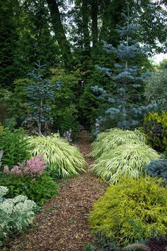 woodland garden shrubs for sale Evergreen Landscape, Evergreen Garden, Evergreen Trees, Garden Shrubs, Shade Garden, Garden Paths, Garden Grass, Garden Beds, Landscape Design