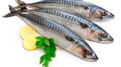 Mackerel Fish (Scomber scrombrus) over white background Poster Omega 3, Mackerel Fish, Seafood Stock, Fish Stock, Fatty Fish, Sea Fish, Ketogenic Diet, Salmon, Stock Photos