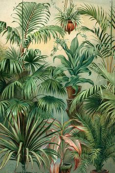 David & David Oak Wood Frame with Mat Vintage Plants Green Wood Ideas - David & David Oak Wood Frame with Mat Vintage Plants Green Wood Ideas - Plant Wallpaper, Tropical Wallpaper, Painting Wallpaper, Plant Painting, Plant Drawing, Plant Illustration, Botanical Illustration, Tropical Wall Decor, Wall Colors