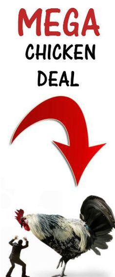 Free Range MEGA Chicken Bulk Deal