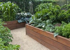 Planning a Raised Bed? Follow These 10 Tips