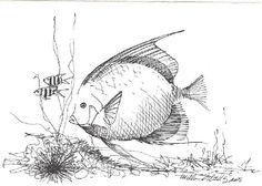 The sea... Watercolor Fish, Fish Drawings, Angel Fish, Adult Coloring, Colouring, Fish Art, Beatrix Potter, Tropical Fish, Under The Sea