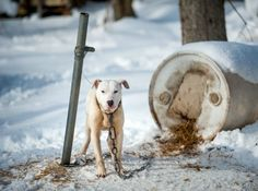 Canada's animal cruelty laws have remained largely unchanged since 1892. Consequently, under the current Criminal Code, it's difficult to prosecute even the worst animal abusers.please take action