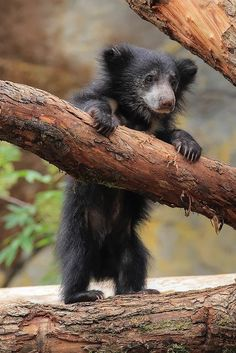 How cute hard to believe this is a wild animal!