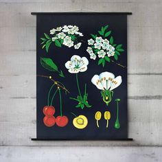 This wall chart shows off a beautiful illustration of a Cherry Tree and was originally designed for educational purposes as a classroom aid.Take a sneaky peak at the rest of our range to see other wall charts. If you can't find the perfect chart then please contact us to see if have what you need.It is now appreciated in its own right as a piece of wall art, and would make a welcome addition to any wall in need of a decorative feature. Illustrated originally in the 1890s it's bec...