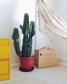 Novo xodozinho da casa! Nosso cactus mandacaru, o Manduca para os íntimos ❤️
