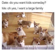 What's cuter than a corgi? Corgi puppies, of course! Corgi Meme, Corgi Dog, Dog Memes, Funny Memes, Hilarious Jokes, Memes Humor, Funny Videos, Baby Animals, Funny Animals