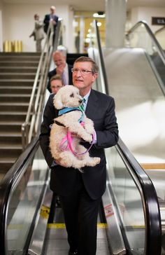 Sen. Kent Conrad, D-N.D., along with his dog Dakota, talks with reporters in the basement of the Capitol before the senate luncheons. Reports from Conrad's office is that Dakota's cancer is in remission and he is feeling quit frisky. (Photo By Tom Williams/CQ Roll Call)