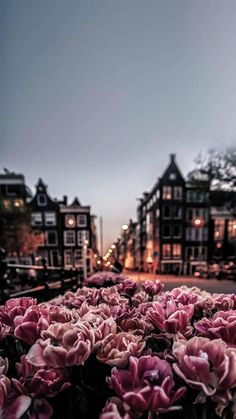 iPhone and Android Wallpapers: Amsterdam Wallpaper for iPhone and Android photography wallpaper Flower Phone Wallpaper, Iphone Background Wallpaper, Nature Wallpaper, Iphone Backgrounds, Wallpaper Wallpapers, Spring Wallpaper, Pretty Wallpapers For Iphone, Ipad Mini Wallpaper, Wallpapers Android