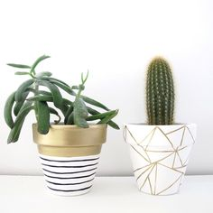 I can't get enough of small potted plants these days! Hand Painted Plant Pot Gold Stripe by ThisWayToTheCircus on Etsy