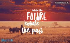 #inhalethefuture #exhalethepast #zebra #serengeti #africa # # # Instagram @martinhosner #followme