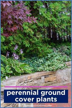 Great list of perennial ground cover plants that love the shade! There are so many different options that are low maintenance and will help prevent weeds in my garden.#fromhousetohome #shade #plants #gardening #groundcover #partshadeperennials