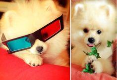 """26-nov-12: """"Pessoal, sou o JOY: estou pronto para curtir um cinema 3D! Foto: Reprodução."""