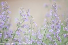 Purple Flower Lavender Wildflower Pastel by WickedFairyTaleArt, $15.00