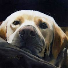 AZPaintings fine art including animal paintings and dog art by Anne Zoutsos. Can you believe this is a painting?