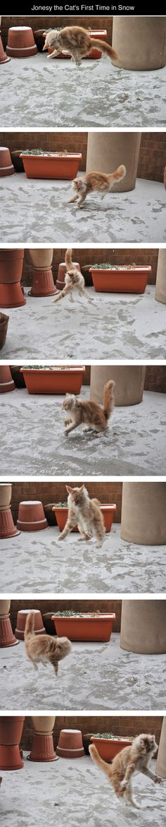 """Jonesey the cat's first time in Snow."" Haha cute! #cat"