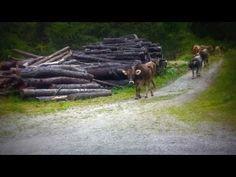 Horses, World, Youtube, Animals, Vacation, Nature, Animales, Animaux, Animal