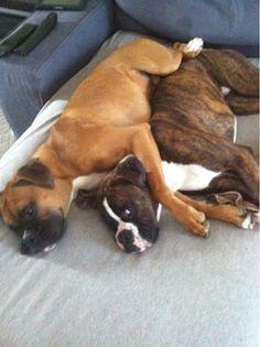 cuddle boxers