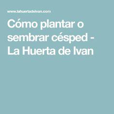 Cómo plantar o sembrar césped - La Huerta de Ivan