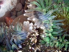 San Diego Tide Pools Spotlight - La Jolla Blue Book Blog