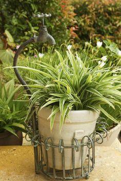 Breitblatt Segge Blumentopf Gras, Planter Pots, Flowers, Gardening, Therapy, Inspiration, Gardens, Patio, Planting Flowers