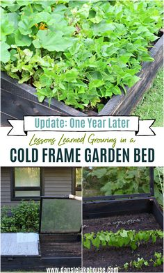 Lessons learned my first year of cold frame gardening. Click to find the link to how to make a cold frame. I have a step by step tutorial for how to build a cold frame garden bed. But this post is about my results and tips for successful cold frame gardening. Cold frame raised beds are a great way to extend the growing season - but there are some drawbacks! How to use a cold frame garden bed takes a little research and practise (and trial and error). My cold frame gardening mistakes and… Fruit Garden, Edible Garden, Vegetable Garden, Cold Frame Gardening, Organic Gardening, Grow Food, Grow Your Own Food, Gardening For Beginners, Gardening Tips