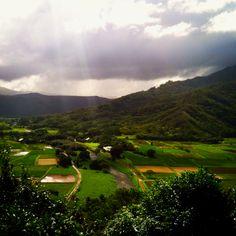 Taro fields near Hanalei, Kauai.