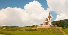 Get To Know The Wines Of Alsace, France