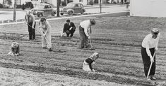 Food Supply Anxiety Brings Back Victory Gardens - The New York Times
