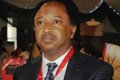 Kaduna Central senator, Shehu Sani has said that the All Progressives  Congress, APC will be doomed if the national leader, Bol...